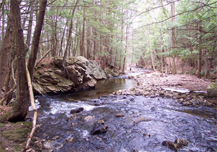Swift River Reservation: Davis Tract